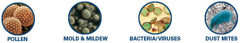 Pollen - Mold & Mildew - Bacteria / Viruses - Dust Mites